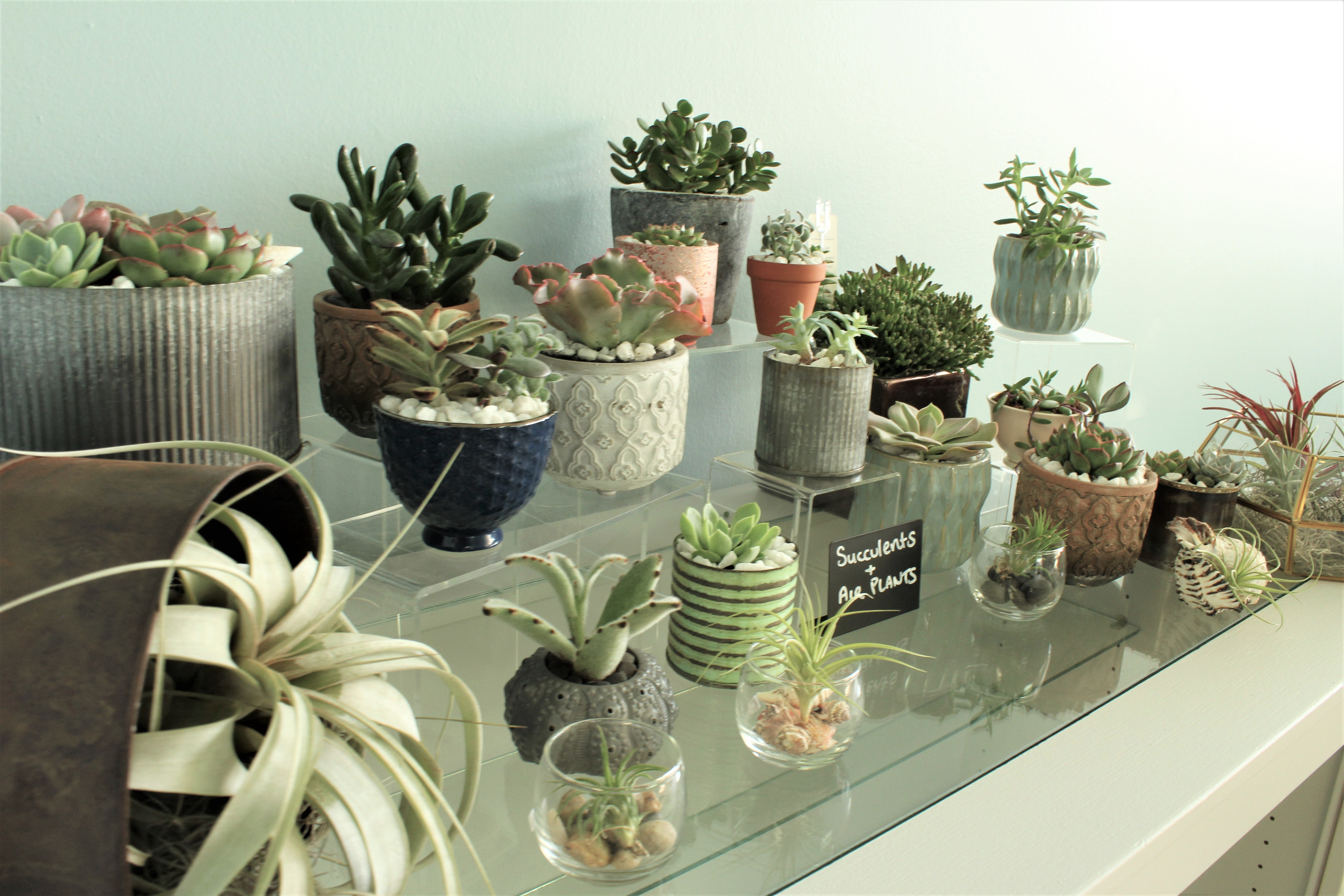 Succulent & Air Plant Gardens