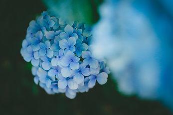 blue flowers, florist, highlands ranch colorado