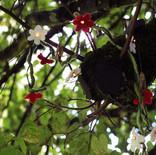 Blumenlichterkette