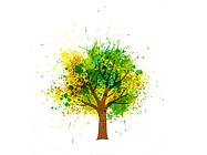 Tree Nimbinrox.com.au.png