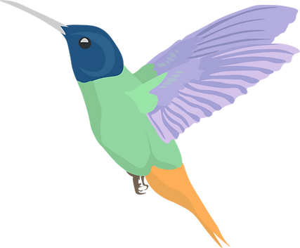kolibri.png