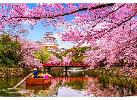 Fioritura dei Ciliegi in Giappone: Tutto quello che c'è da sapere sull'Hanami.