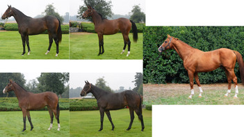 Thoroughbred Race Horses