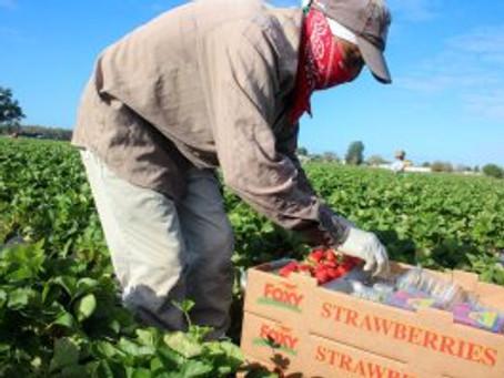 ECMHSP Prepares for Florida's Farmworker Families