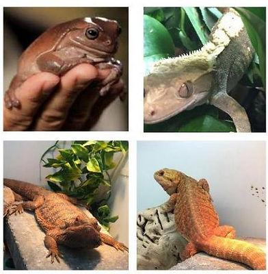 reptile_edited.jpg