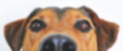 peeking dog.jpeg
