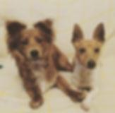 Reggie and Monty.jpg