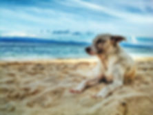 dog on beach.jpeg