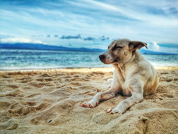 dog on beach.jpeg