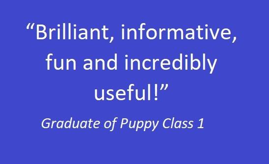 Puppy class 01.jpg