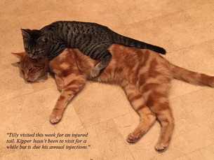 Kipper and Tilly.jpg