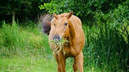 horse eating.jpeg