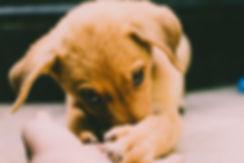 puppy nose.jpeg
