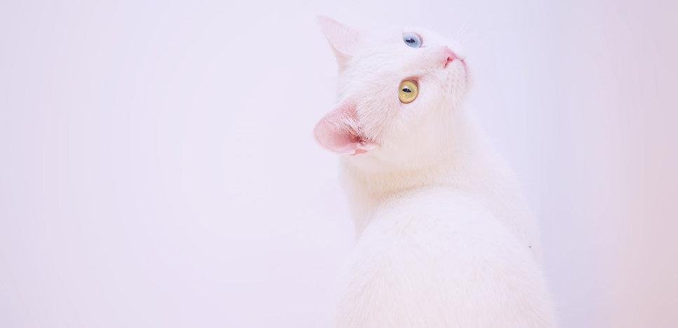 cat again.jpeg