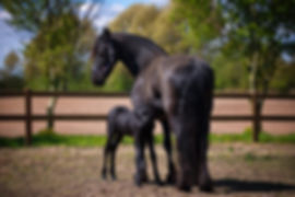mare and foal.jpg