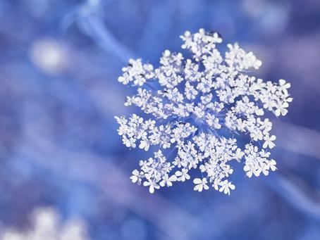 Ist die Schneeflocken-Methode richtig für Deinen Roman?
