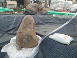 בריכת שחיה טבעית- הנחת סלעים