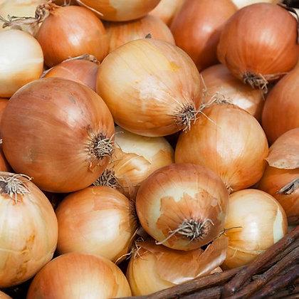 Cebolla (grano de Oro)