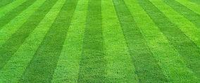 healthy lawn.jpg