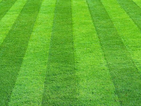 The Battle of Sod vs. Seed