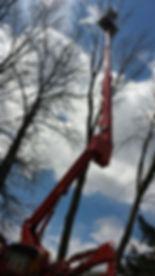 treeworks2_060519.jpeg