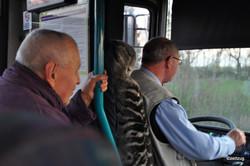 Autobus nach Kersko