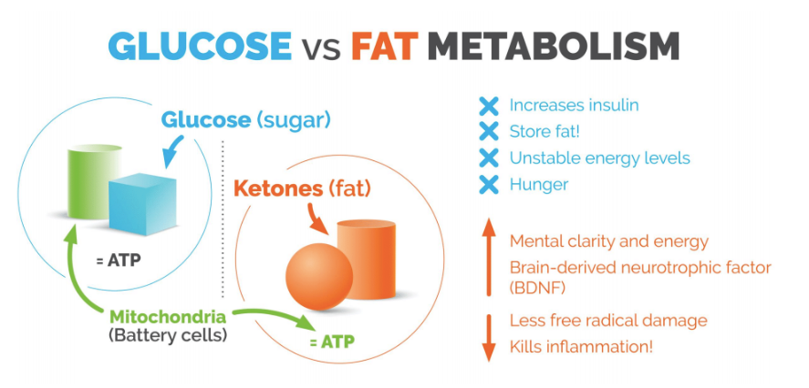 Glucose vs fat.PNG