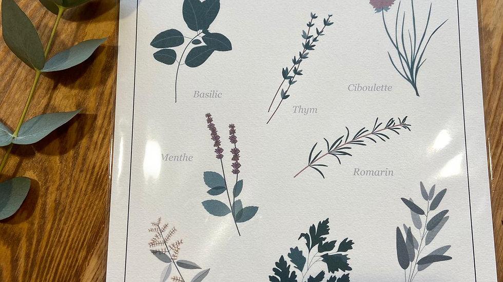 """Affiche herbier - """"Poussière des rues"""""""