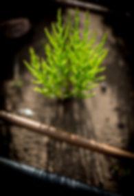 Yanik sowing samphire seed-26.jpg