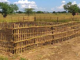 Salicornia in Malawi