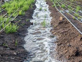 Managing for Carbon Sequestration Alongside Wetland Farming