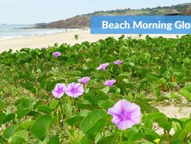 Importance of Coastal Vegetation