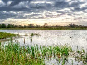 Wetland-Generated Carbon Credits and the Voluntary Carbon Market