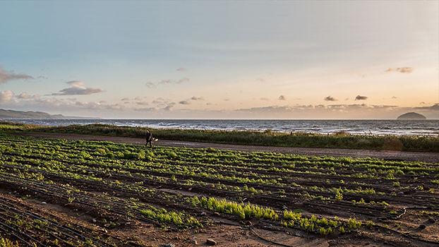 Seawater Farming (1).jpg
