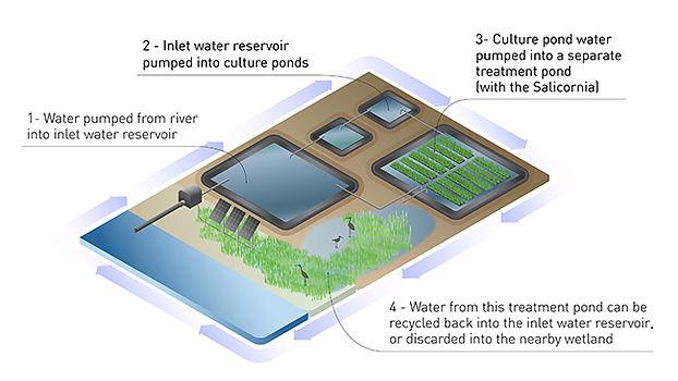 Eco-services (3).jpg