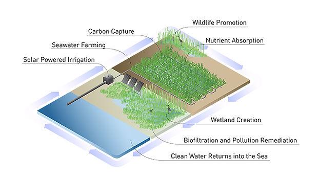 Eco-services (2).jpg