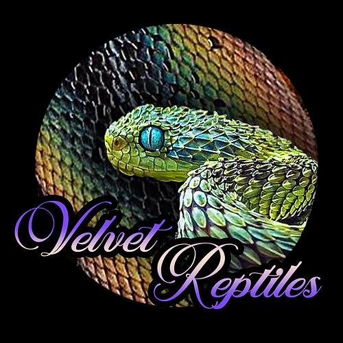 Velvet Reptiles logokuva.jpg