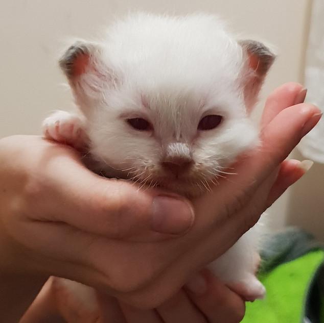 Boy kitten litter E.jpg