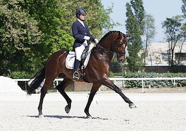 extended-trot-dressage-picture-id1713583