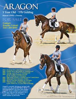 Flyer - Sale Horse