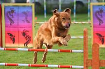 Dog Agility - Event