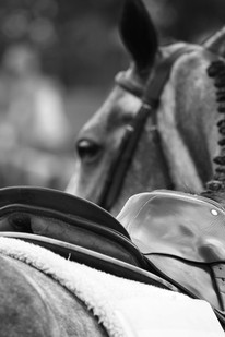 Horse Show - Event
