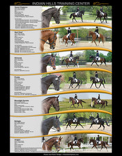 Poster - Dressage Horses