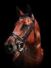 Sale Horse - Private Session