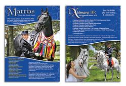 Flyer for Stallion Marketing