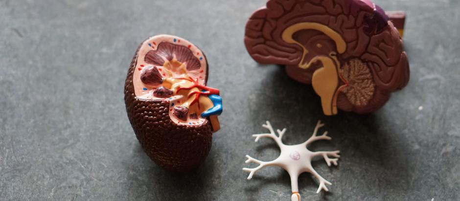 Insights into Parkinson's disease dementia