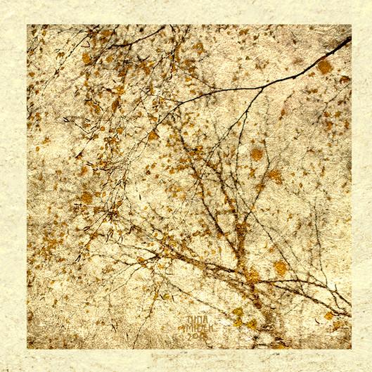 Bouleaux en automne - triptyque web.jpg