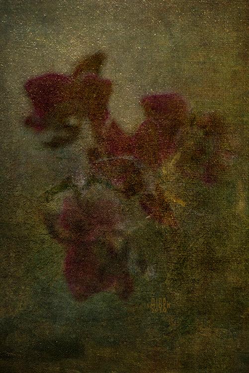 Orchide II web.jpg
