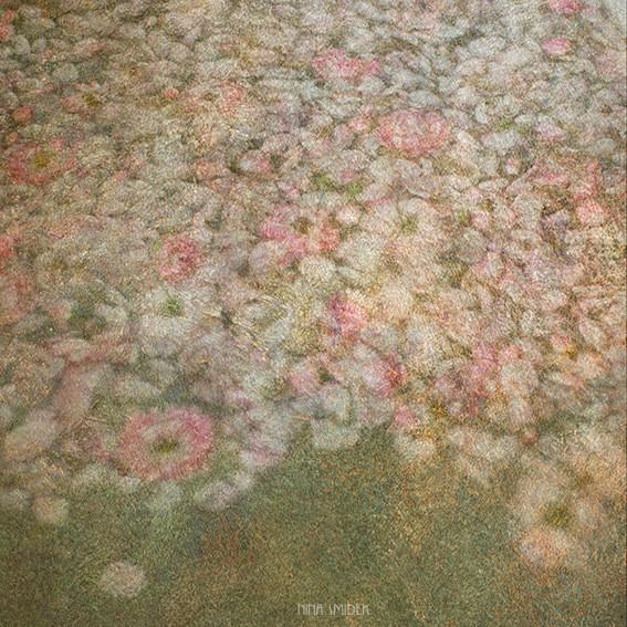 Roses d'Ophélie