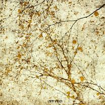 Bouleaux en automne (triptyque)